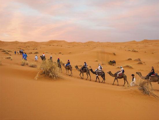 Tinh mắt tìm cây xương rồng trên sa mạc nóng bỏng - 4