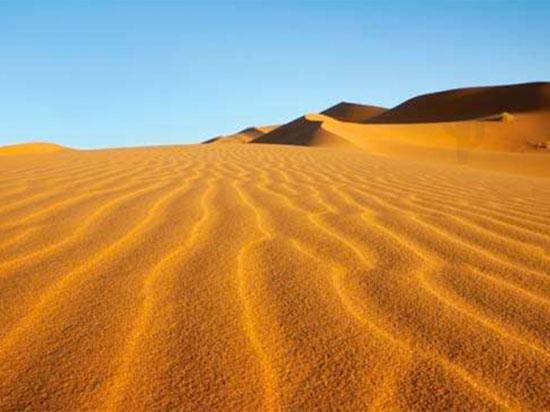 Tinh mắt tìm cây xương rồng trên sa mạc nóng bỏng - 5