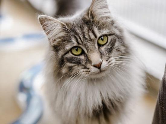 Bạn biết gì về loài mèo? - 5