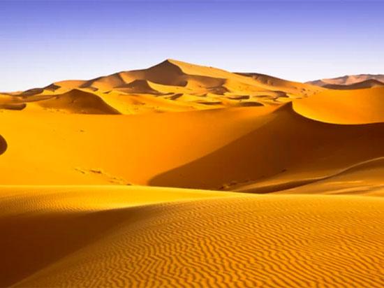 Tinh mắt tìm cây xương rồng trên sa mạc nóng bỏng - 6