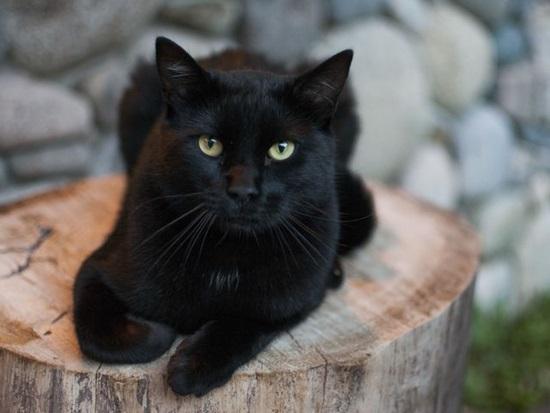 Bạn biết gì về loài mèo? - 6