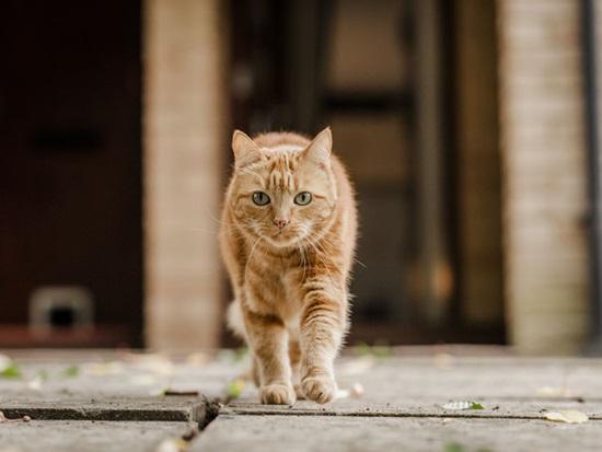 Bạn biết gì về loài mèo? - 7