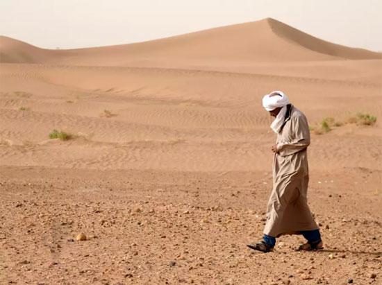 Tinh mắt tìm cây xương rồng trên sa mạc nóng bỏng - 7