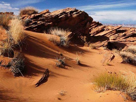Tinh mắt tìm cây xương rồng trên sa mạc nóng bỏng - 8
