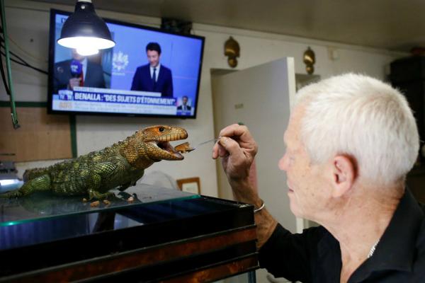 Người đàn ông Pháp chung sống với một đàn rắn, cá sấu, thằn lằn - 2