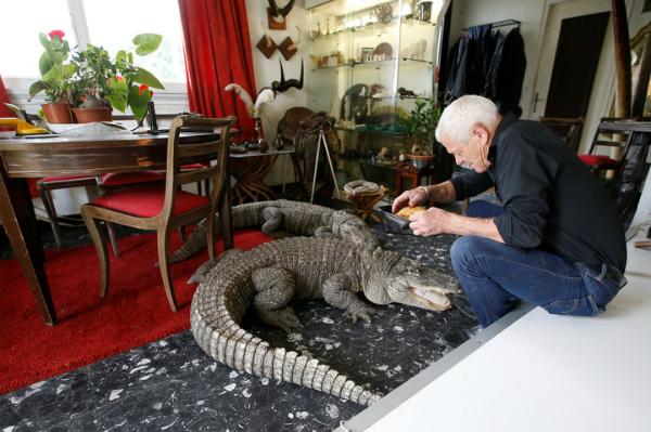 Người đàn ông Pháp chung sống với một đàn rắn, cá sấu, thằn lằn - 1