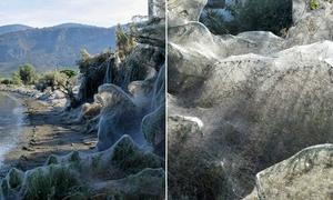 Mạng nhện khổng lồ dài 300m ở khu du lịch Hy Lạp
