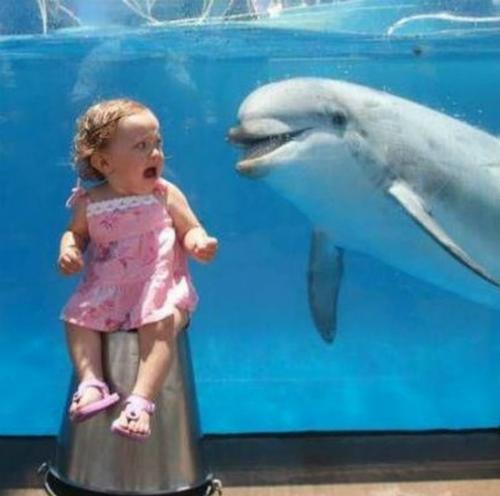 Cá heo không phải lúc nào cũng thân thiện ...