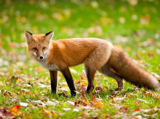 Giống đực - cái của động vật dùng trong tiếng Anh ra sao? - 6