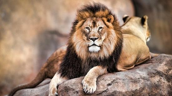 Giống cái - đực của động vật dùng trong tiếng Anh ra sao? (2) - 2