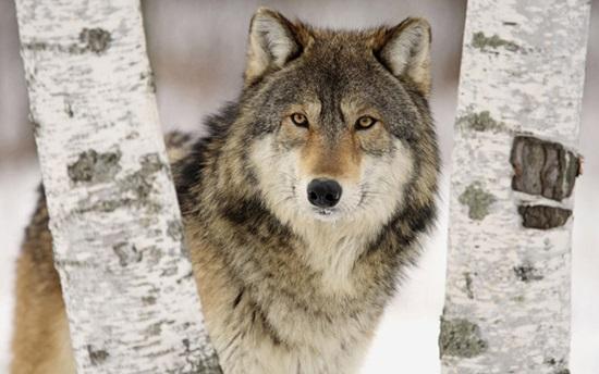 Giống cái - đực của động vật dùng trong tiếng Anh ra sao? (2) - 7