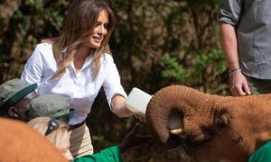 Đệ nhất phu nhân Mỹ giật mình vì bị voi 'tấn công'