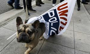 Cả nghìn chú chó nước Anh tham gia biểu tình phản đối Brexit