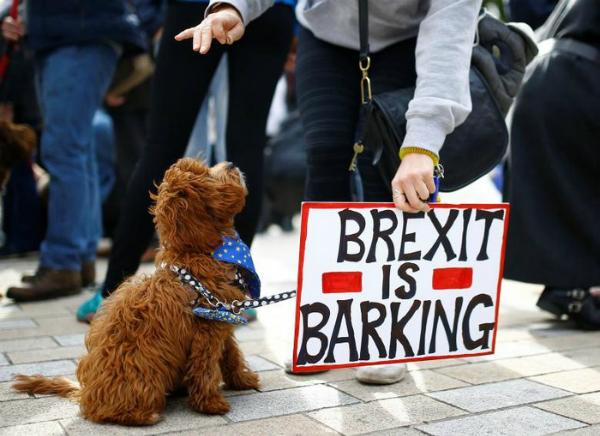 Những người tổ chức chiến dịch này cho rằng thú cưng sẽ phải chịu hậu quả từ việc Anh rời EU do tình trạng thiếu hụt bác sĩ thú y và thức ăn cho vật nuôi tăng giá.