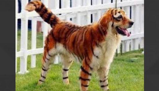 Những con vật này có thực không hay là photoshop? - 11