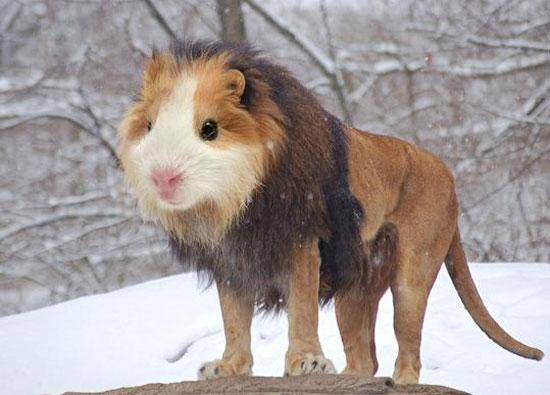 Những con vật này có thực không hay là photoshop? - 3