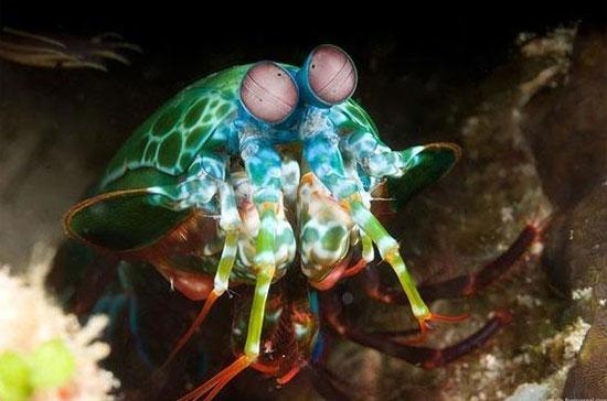 Những con vật này có thực không hay là photoshop? - 8