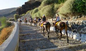 Hy Lạp cấm du khách 'thừa cân' cưỡi lừa đi dạo ở đảo Santorini
