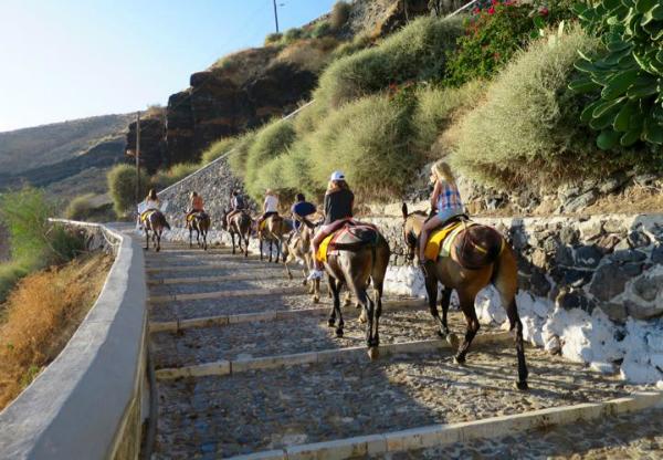 Du khách cưỡi lừa trên đảo Santorini