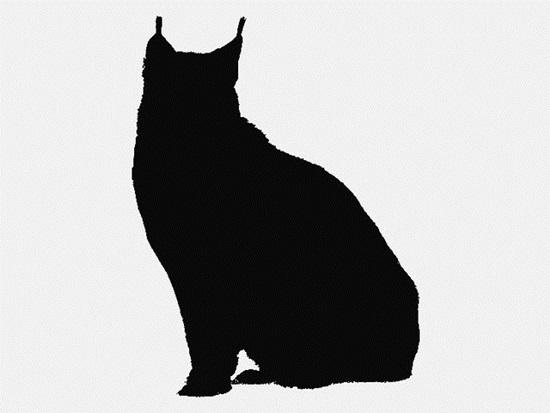 Nhìn bóng mèo cưng đoán giống loài - 7