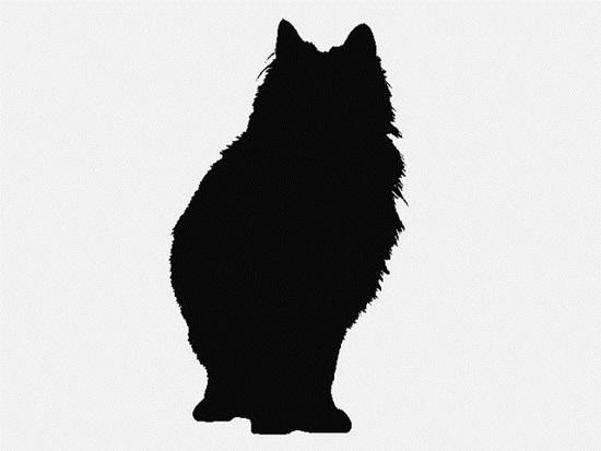 Nhìn bóng mèo cưng đoán giống loài (2)