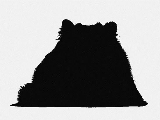 Nhìn bóng mèo cưng đoán giống loài (2) - 2