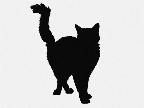 Nhìn bóng mèo cưng đoán giống loài (2) - 7