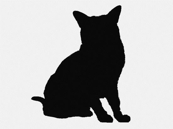 Nhìn bóng mèo cưng đoán giống loài - 3