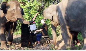 Nghệ sĩ dương cầm khiến những chú voi phấn khích với âm nhạc