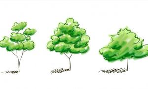 Trắc nghiệm: Giải mã tâm lý con người thông qua cách vẽ cây