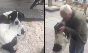 Cảm động khoảnh khắc người chủ tìm lại được cún cưng sau ba năm thất lạc