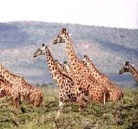 5 con vật trên cạn nặng nhất là con nào? - 19