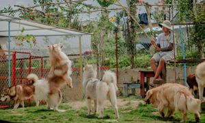 Hai 'kẻ khùng' bỏ Sài Gòn lên Đà Lạt nuôi chó