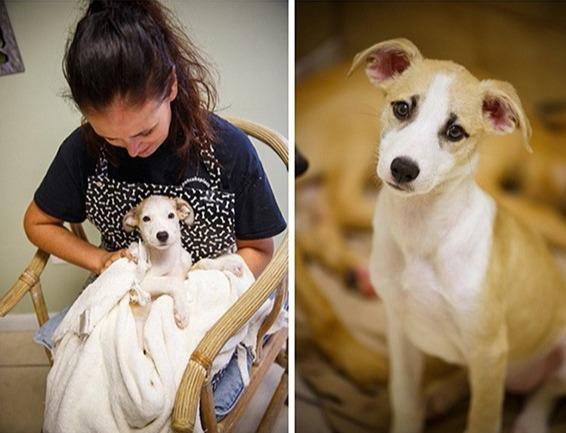 Một tình nguyện viên và con chó được cô ấy chăm sóc