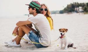 Hòn đảo nổi tiếng với dịch vụ 'dắt chó đi dạo'