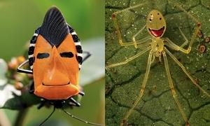 Những con bọ siêu đáng yêu khiến bạn mê mẩn