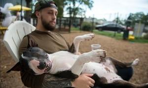 Việc nhẹ lương cao: Kiếm 100 USD mỗi giờ chỉ nhờ ngồi chơi với chó