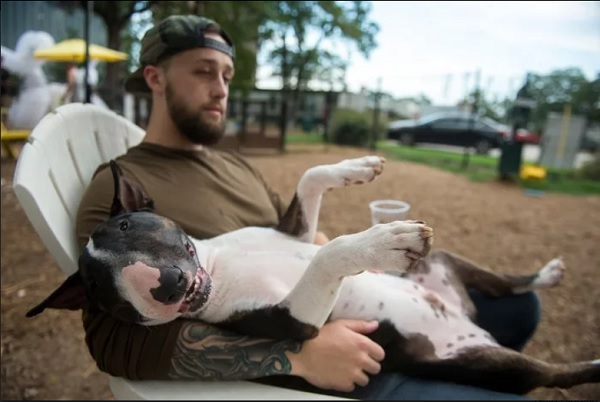 Bạn sẽ được nhận một khoản hậu hĩnh chỉ để chơi với những chú chó.