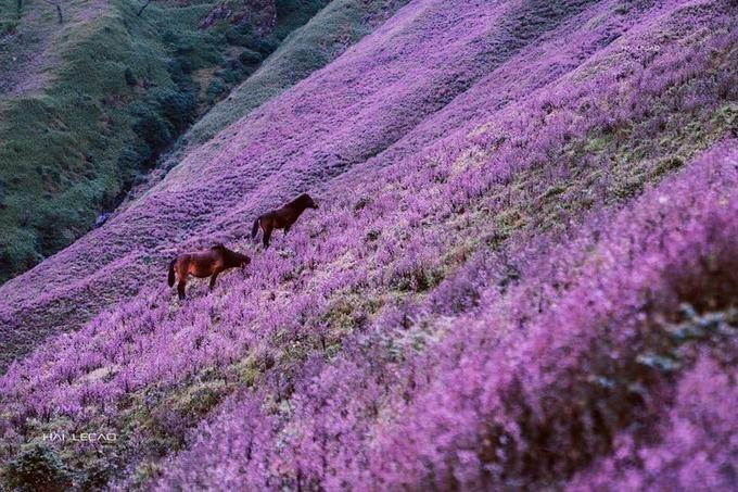 """<p> """"Ngắm cảnh đẹp như cõi tiên này, chắc hẳn ai ai cũng sẽ cảm thấy chuyến đi của mình không hề phí công. Những chú ngựa lang thang gặm cỏ, những hàng rào gỗ mộc mạc, những ngọn núi chỉ còn trơ cây bụi khô đều thật ấn tượng. Đứng trên đỉnh, chúng tôi thấy được những dãy núi trùng trùng điệp điệp thấp hơn ở phía dưới. Ở đây, tôi được cảm nhận như đang đứng ở nơi giao thoa giữa trời và đất"""", anh Trường chia sẻ.</p>"""