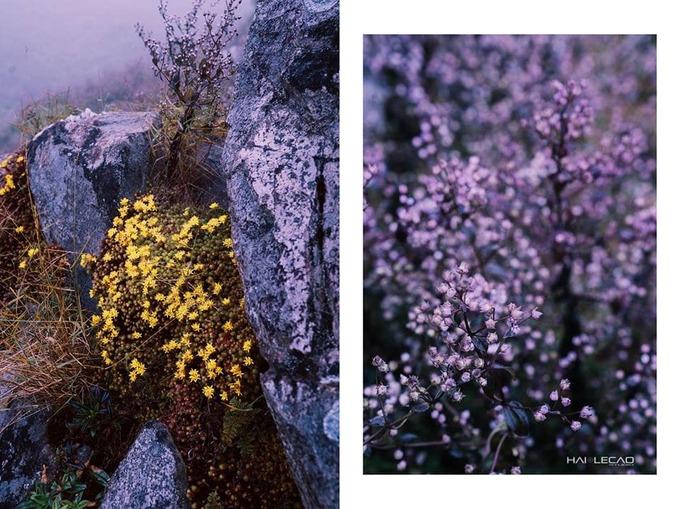 <p> Đến tháng 10, tháng 11 hàng năm hoa chi pâu bắt đầu vào mùa. Hoa phủ bạt ngàn các sườn đồi thành một màu tím đẹp mắt.</p>