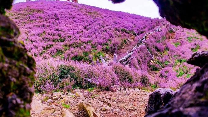 """<p> Ngoài những đồi hoa tím ngắt, trekking vào thời gian này cũng là một trải nghiệm thú vị với thử thách """"săn mây"""" - một khung cảnh hiếm có mà bất cứ phượt thủ nào cũng muốn được tận hưởng.</p>"""