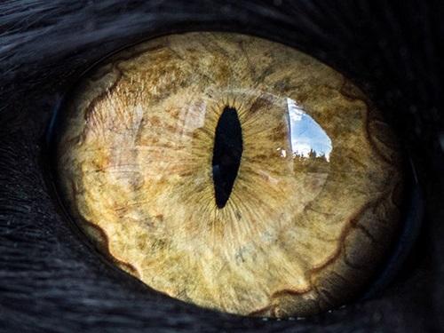 Nhìn đôi mắt phóng đại đoán con vật