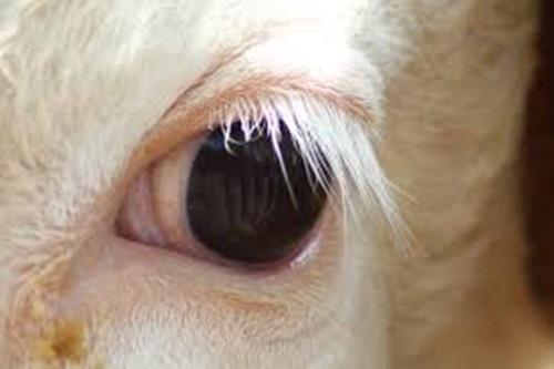 Nhìn đôi mắt phóng đại đoán con vật - 5