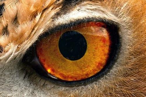 Nhìn đôi mắt phóng đại đoán con vật - 7