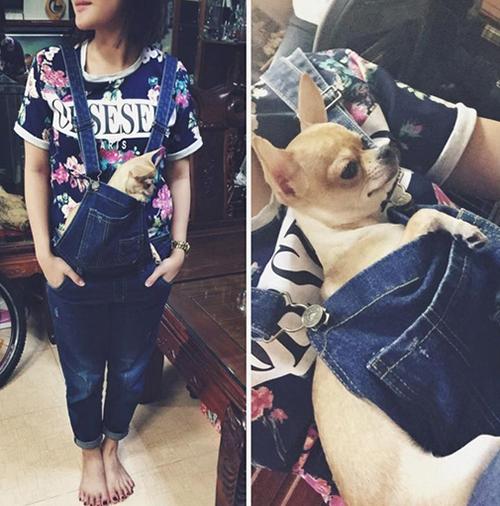 Văn Mai Hương cũng có tình yêu lớn với những chú chó Chihuahua. Cô nàng đưa cún đi chơi, đi theo sự kiện, thậm chí còn gọi là con.