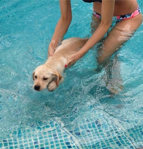 Thời gian rảnh, cô dạy các em pet tập bơi.