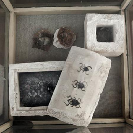 Quan tài đá vôi hình chữ nhật được niêm phong bằng hình vẽ bọ hung. Ảnh: AFP