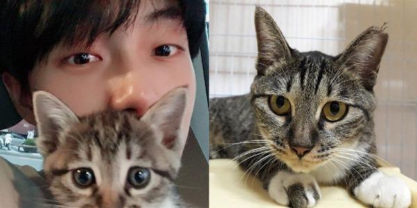 Kim Yong Guk bị tố bỏ rơi chú mèo cưng Rcy từ tháng 7 năm nay nhưng vẫnthường xuyên hành động như thể mình vẫn đang nuôi Rcy, khiến các fan cực kỳ tức giận khi nhận ra anh đã diễn quá giỏi để qua mặt người hâm mộ.