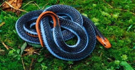Khám phá các loài rắn độc qua những câu đố hóc búa - 8