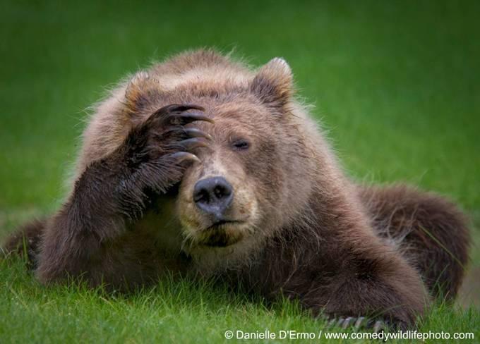 <p> Chú gấu nâu đầy tâm sự. Tác phẩm của tay máy Valterri Mulkahainen, Phần Lan.</p>